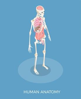 Isometrische zusammensetzung der menschlichen anatomie mit skelett und inneren organen 3d