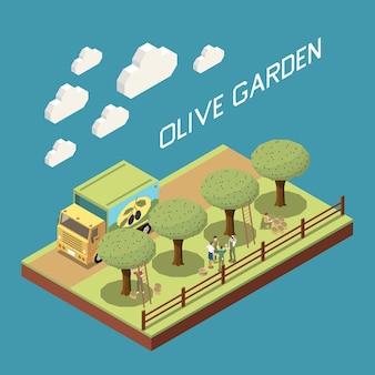 Isometrische zusammensetzung der olivenproduktion mit blick im freien auf den garten mit baumreihe, lkw und menschen