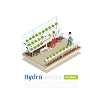Isometrische zusammensetzung des modernen hydroponischen gewächshauses mit 2 arbeitern, die pflanzen kontrollieren, die ohne banner des bodenbewässerungssystems wachsen