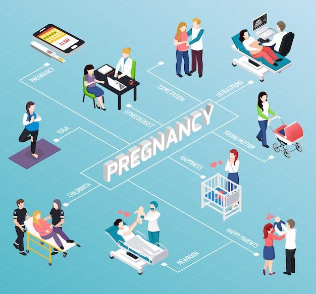 Isometrisches flussdiagramm der schwangerschaft