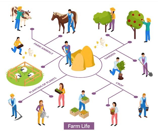 Isometrisches zusammensetzungsflussdiagramm des gewöhnlichen landwirtlebens mit lokalisierten menschlichen charakteren und von pflanzen und tieren