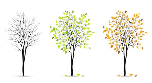 Jahreszeiten des baumes