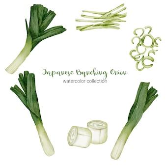 Japanische bündelzwiebel in der aquarellsammlung mit voll, in scheiben geschnitten und in zwei hälften geschnitten
