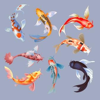 Japanischer karpfen der koi-fischillustration und bunter orientalischer koi in asien-satz des chinesischen goldfisches und des isolierten hintergrunds der traditionellen fischerei.