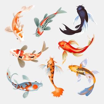 Japanischer karpfen der koi-fischillustration und der bunte orientalische koi in asien setzen chinesischen goldfisch und traditionellen fischerei lokalisierten hintergrund