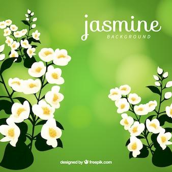 Jasmin hintergrund mit dekorativen stil