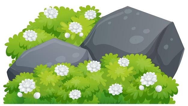 Jasminblüten auf grünem busch