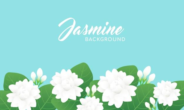 Jasminblütenhintergrund