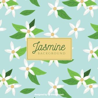 Jasminhintergrund mit weißen blumen