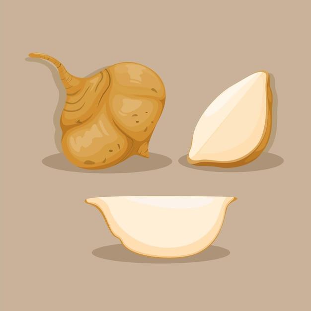 Jicama-wurzelgemüse-objekt-set-illustrationsvektor