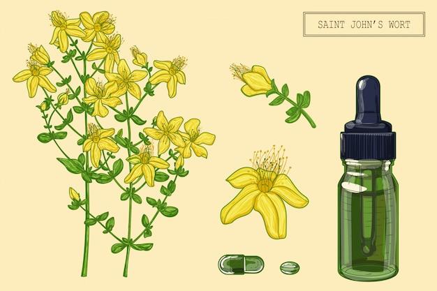 Johanniskrautpflanze und tropfer