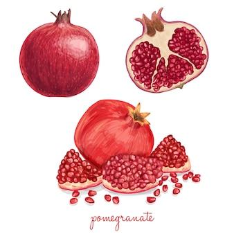 Juicy köstlichen hand gezeichnet granatapfel