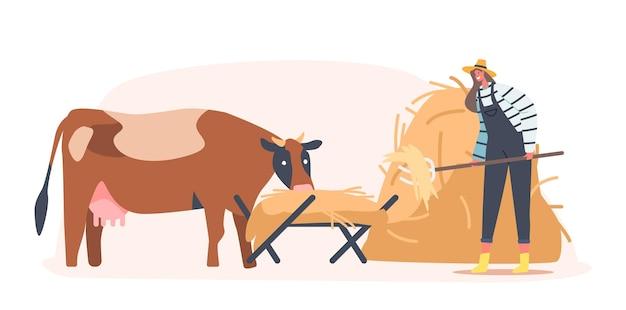 Junge bäuerin, die kuh füttert, die stroh in trog setzt. weibliche figur im arbeitsprozess pflege von haustieren auf der rinderfarm. landwirtschaft, rancher-arbeitstätigkeit. cartoon-vektor-illustration