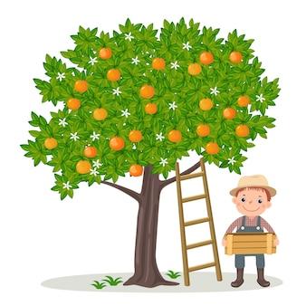 Junge, der orangen pflückt