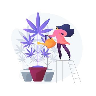 Junge frau, die hanfpflanze, verbotene zimmerpflanze wässert. marihuana-anbau, medizinisches cannabis, illegaler gartenbau. mädchen wächst unkraut.