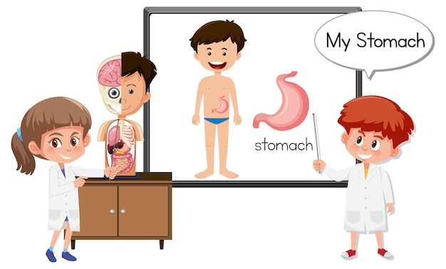 Junger arzt, der die anatomie des magens erklärt