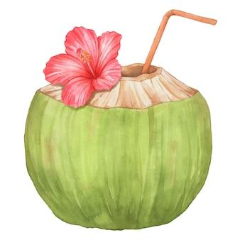 Junges kokos- und hibiskusaquarell