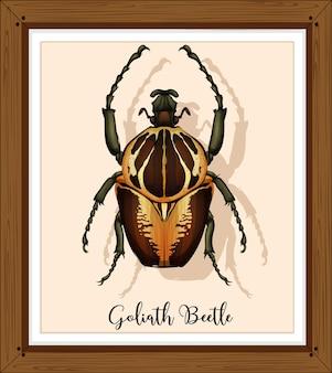 Käfer auf holzrahmen