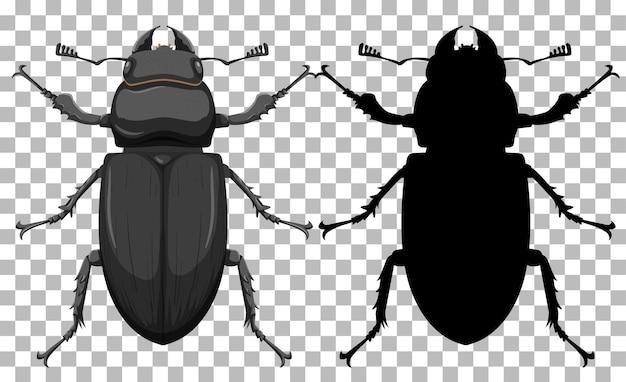 Käfer auf transparentem hintergrund