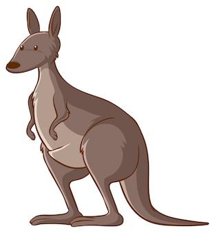 Känguru auf weißem hintergrund