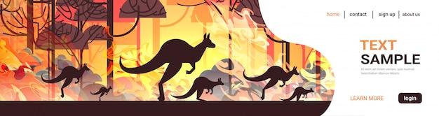 Känguru läuft von waldbränden in australien tiere sterben in lauffeuer busch feuer brennenden bäumen naturkatastrophe konzept intensive orange flammen horizontal
