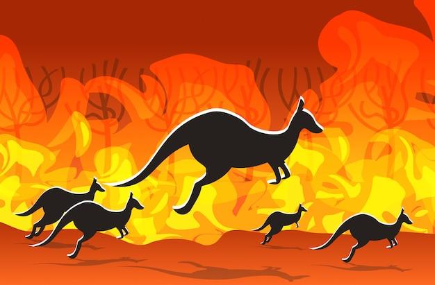 Känguru läuft von waldbränden in australien tiere sterben in lauffeuer buschfeuer brennenden bäumen naturkatastrophe konzept intensive orange flammen horizontal