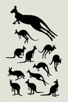 Känguru sil, houette