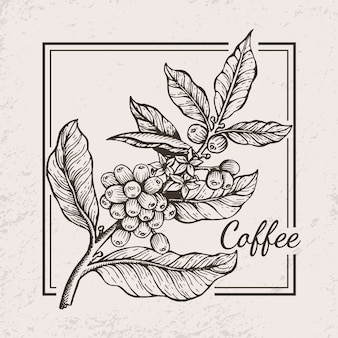 Kaffee-beeren-zweig-ikonen-illustration