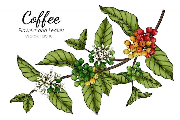 Kaffeeblumen- und blattzeichnungsillustration mit strichzeichnungen auf weiß