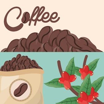 Kaffeebohnen baumsack frisch