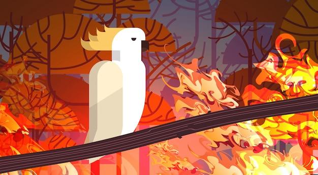 Kakadu, der auf niederlassungswaldbränden in australien-tier stirbt in den intensiven orange horizontalen flammen des waldbrand-brennenden naturkatastrophenkonzeptes der bäume des verheerenden feuers sitzt