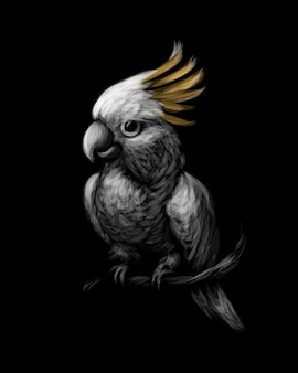 Kakadu-papagei mit schwefelhaube, cacatua galerita, mit kamm vorne auf schwarzem hintergrund. illustration