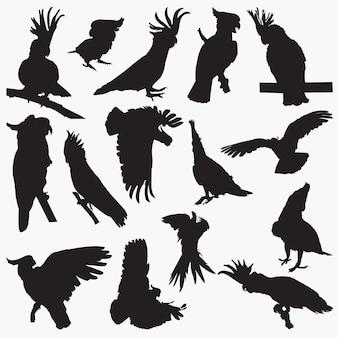 Kakadu-silhouetten