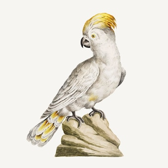 Kakadu-vogel-vintage-illustrationsvektor