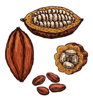 Kakao superfood zeichnungssatz