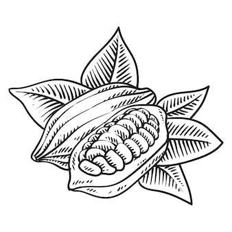 Kakaofruchtbohne