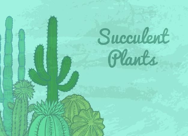 Kakteen pflanzen hintergrund