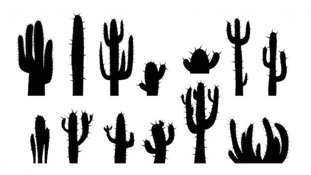 Kaktus auf weiß gesetzt