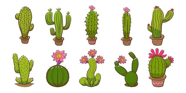 Kaktus gesetzt