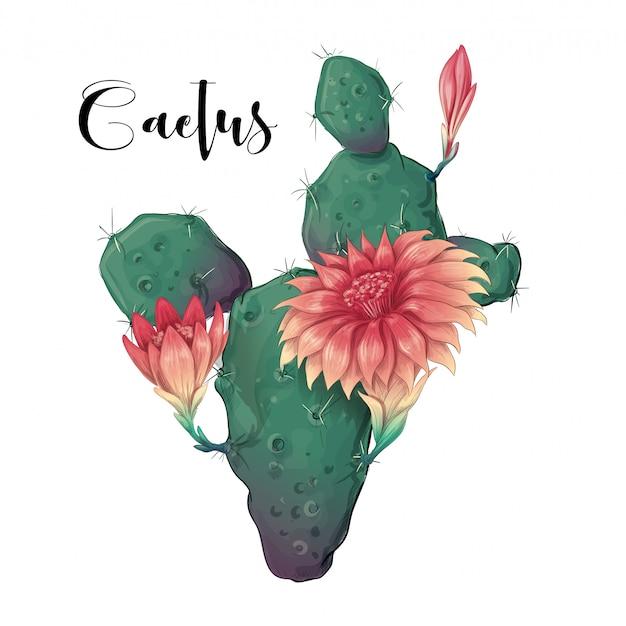 Kaktus im wüstenvektor und -illustration