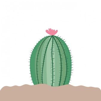 Kaktus in der landschaft getrennt