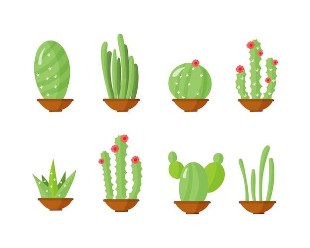 Kaktus in töpfen, zimmerpflanzen mit blumen. tropische pflanze.