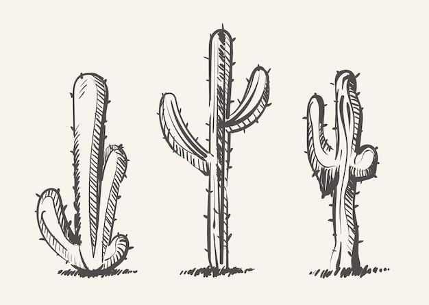 Kaktus skizziert vektorhand gezeichnete illustration