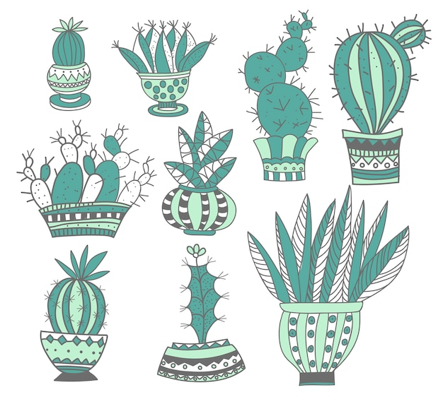 Kaktus und sukkulenten