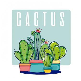 Kaktus zimmerpflanzen