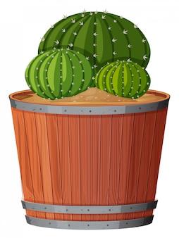 Kaktuspflanze im topf
