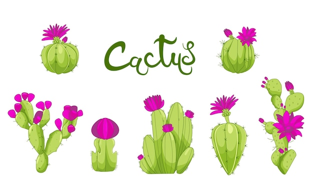 Kaktuspflanzen dekorative icons set kaktus rosa blumen