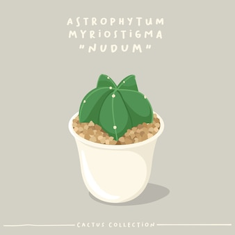 Kaktustypensammlung. kaktus im weißen kleinen topf lokalisiert auf beigem hintergrund.