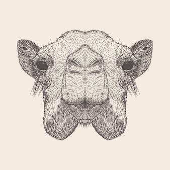 Kamel-illustration, hand gezeichnetes design.