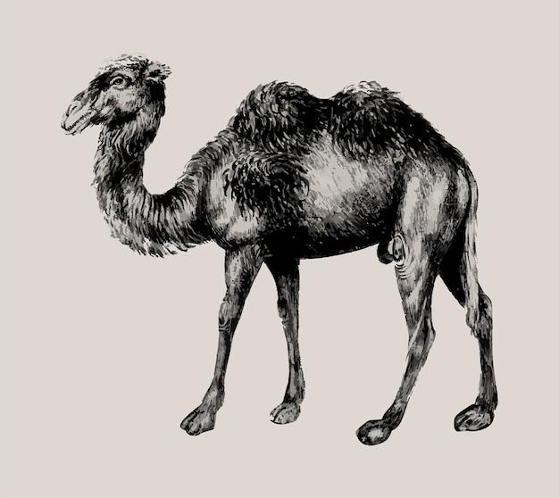 Kamel im vintage-stil